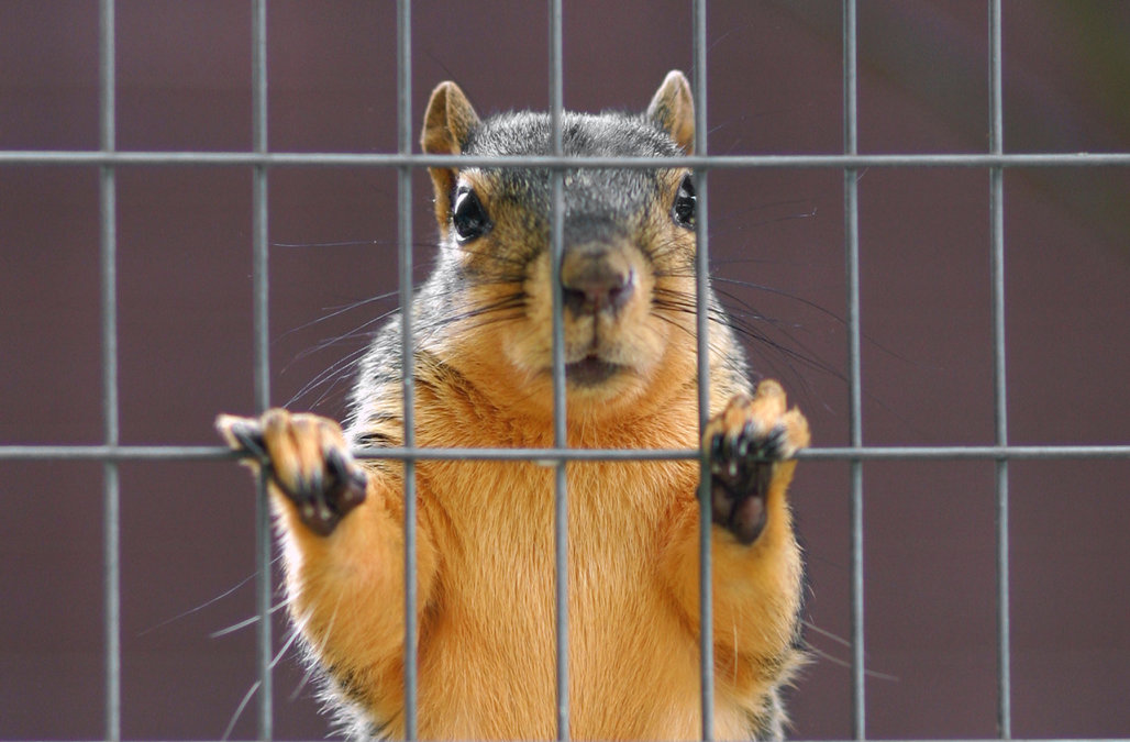 Emotional support squirrel gets kicked off airplane
