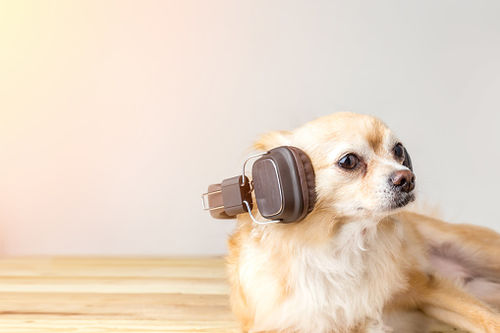 Playing Bob Marley Can Calm Your Pets Down!?