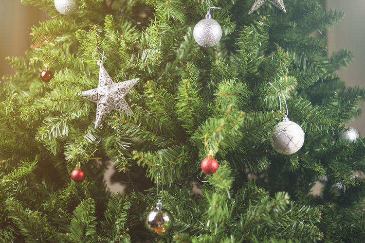 How to Keep Your Christmas Tree Alive Through December