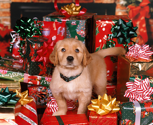 Why You Should Get Your Pet a Christmas Present