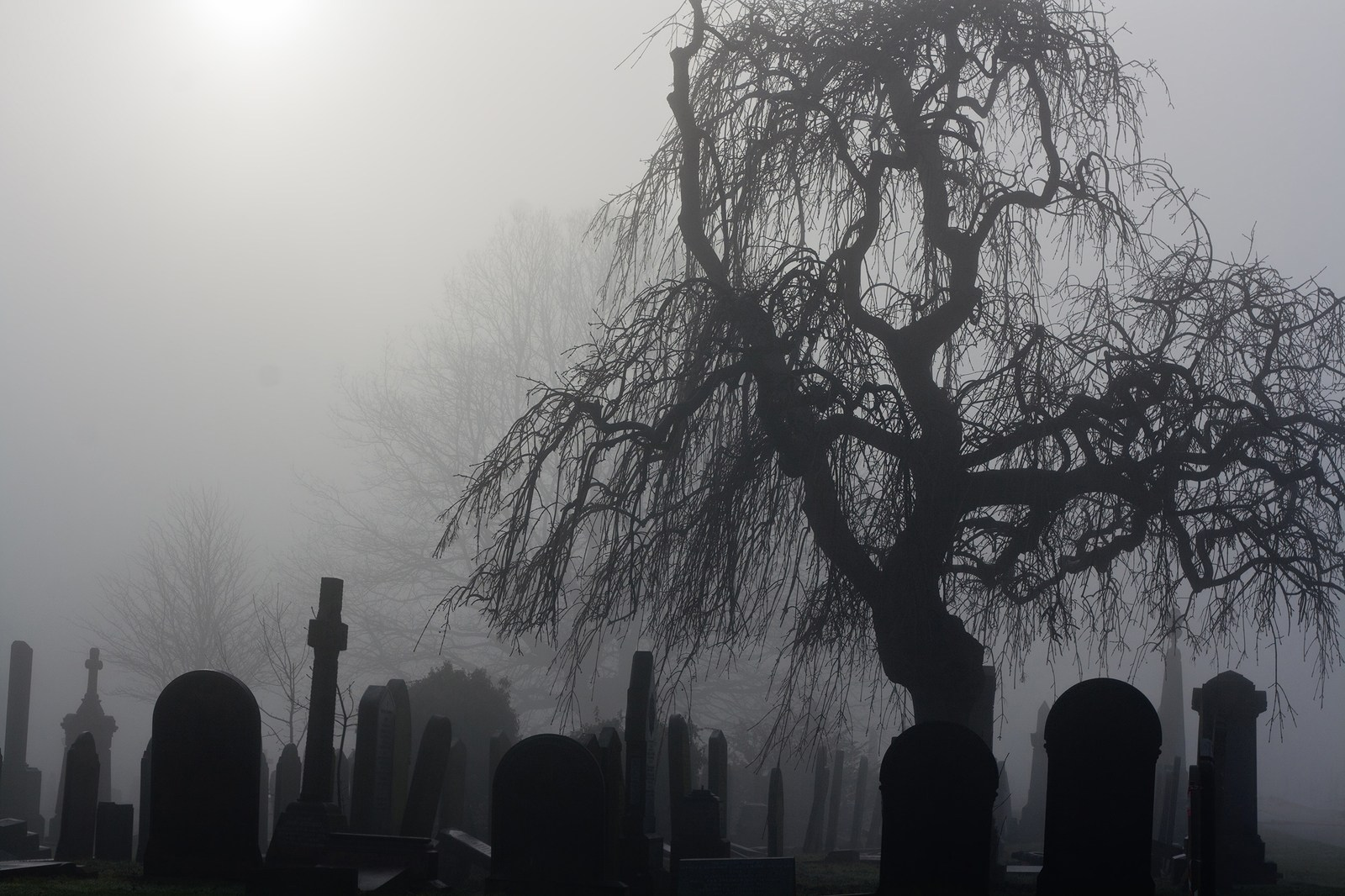More People Will Die This Week Than Any Other Weeks Of The Year
