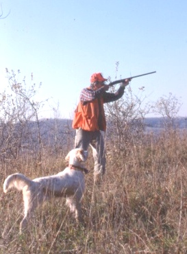 Trent Lakes man fined $2,500 for hunting violations