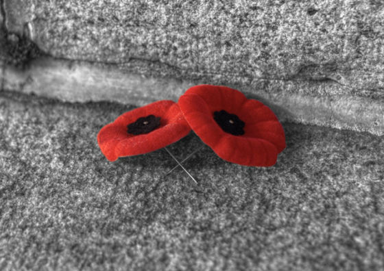Successful poppy campaign