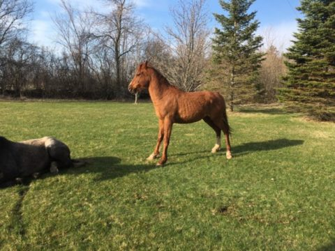 Trial in roaming horses case