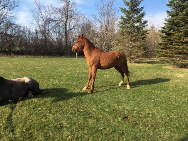Stray horses cost Tyendinaga Township $24,000