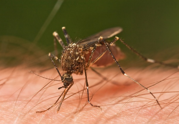 More mosquitoes lead to rise in West Nile cases in Maricopa County