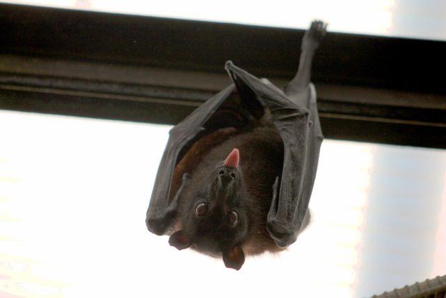 Health Unit warns about rabid bats
