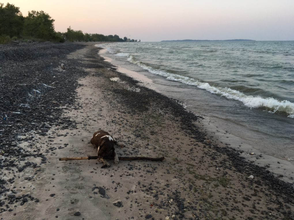 One local beach unsafe for swimming this long weekend