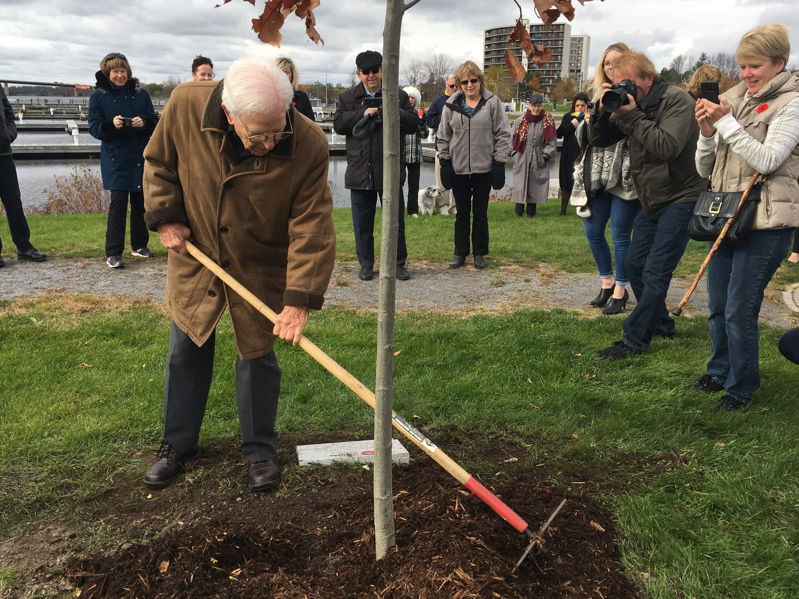 United Way dedicates red oak to Maurice Rollins