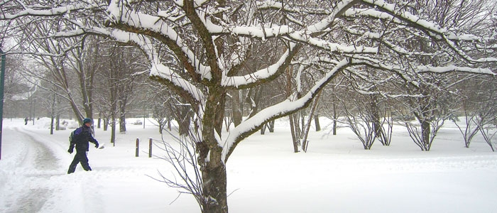 Western and Fanshawe campuses remain open in snow