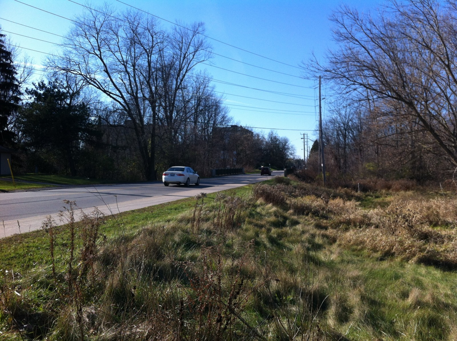 Increase in animal-related car crashes likely due to increase of deer population