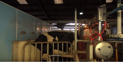 Dairy Farming gaining recognition in London