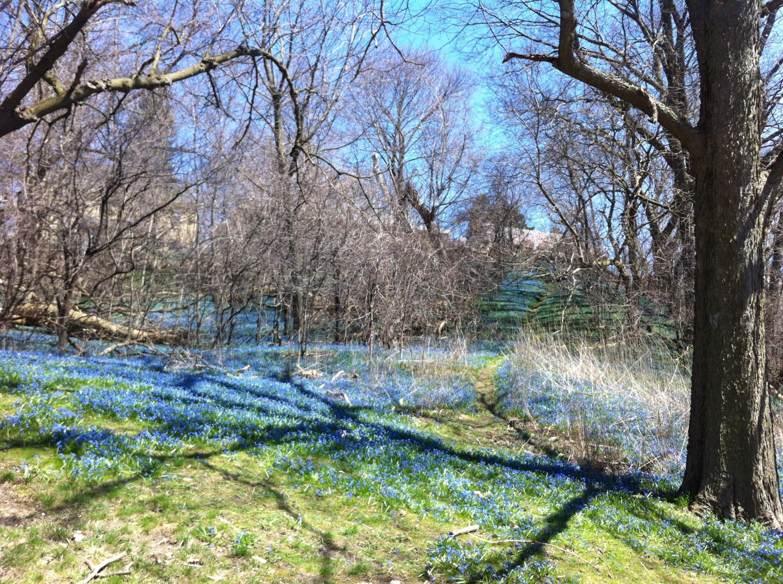 Upcoming Harris Park Renovations