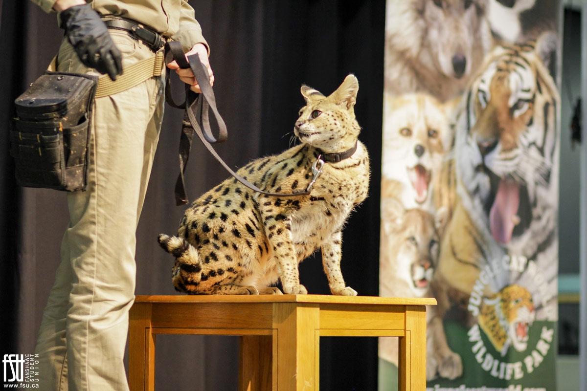 Exotic animals take centre stage as wildlife show roars through Fanshawe