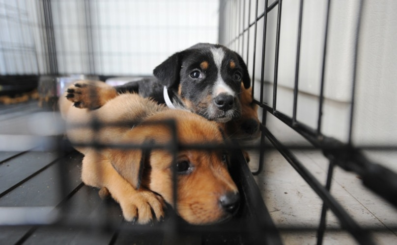 Shelter dogs hope for home for holidays