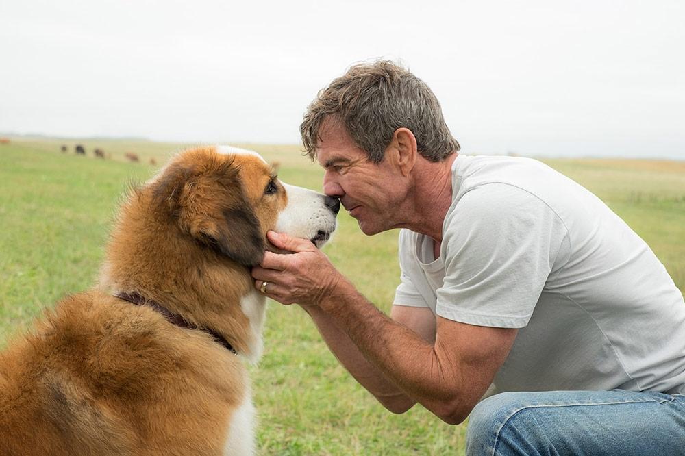 A Dog's Purpose movie update