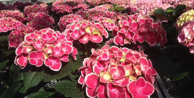 Flower Power - with Fanshawe's Horticulture Program