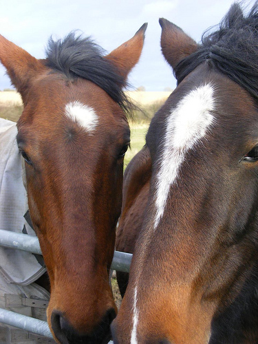 Therapeutic horseback riding helping those with special needs