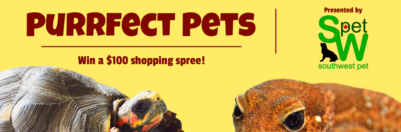 Contests – Purrfect Pets