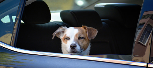 Forget once, regret forever: do not leave pets inside cars on hot days
