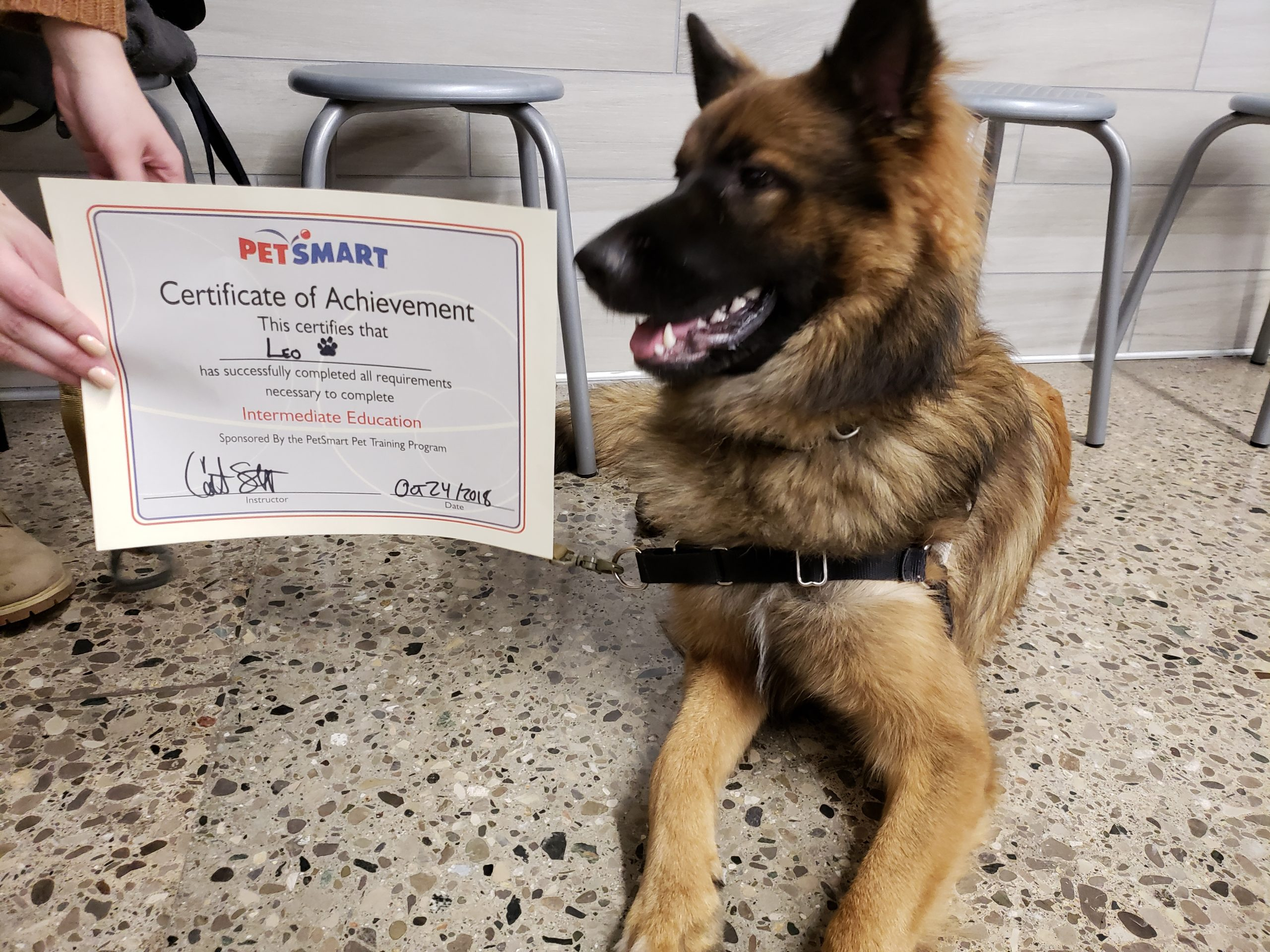 Positive reinforcement builds bonds between owners and dogs