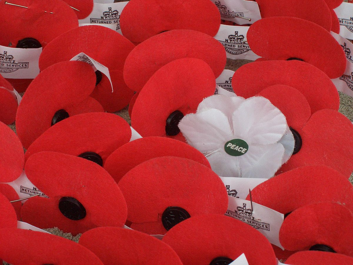 What is the difference between red and white poppies?
