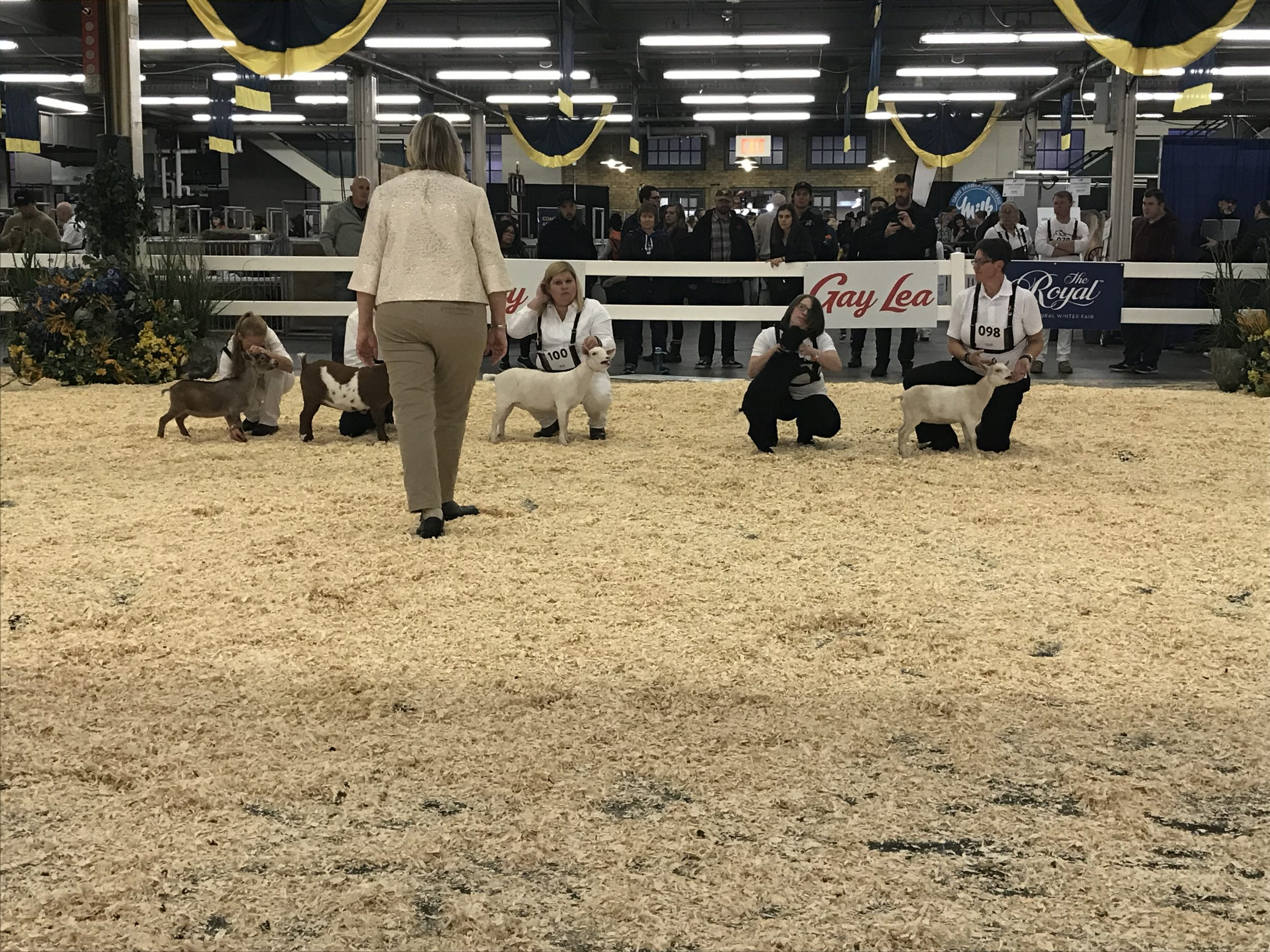 Future of farming looks bright at the Royal Agricultural Winter Fair