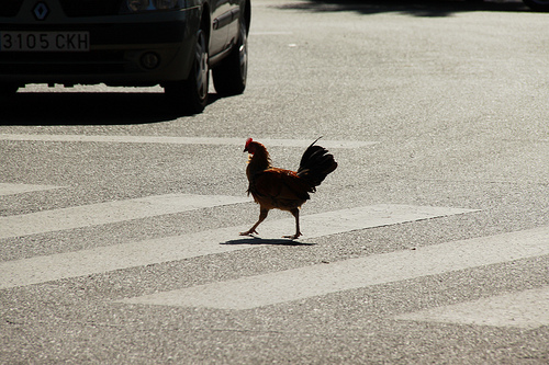 Why Did The Chicken Cross The Road? Which Came First, The Chicken Or The Egg? Why Are Chickens Shooting Fireballs At Me From Their Bum?