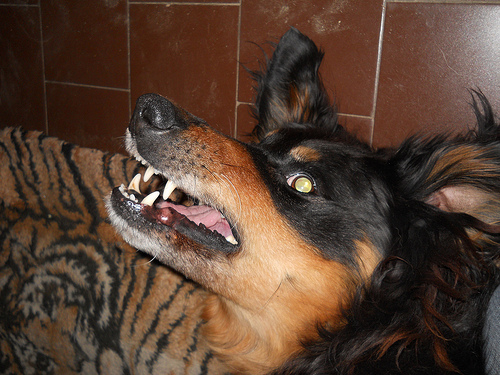 Dog Was High On Crack When It Killed Owner