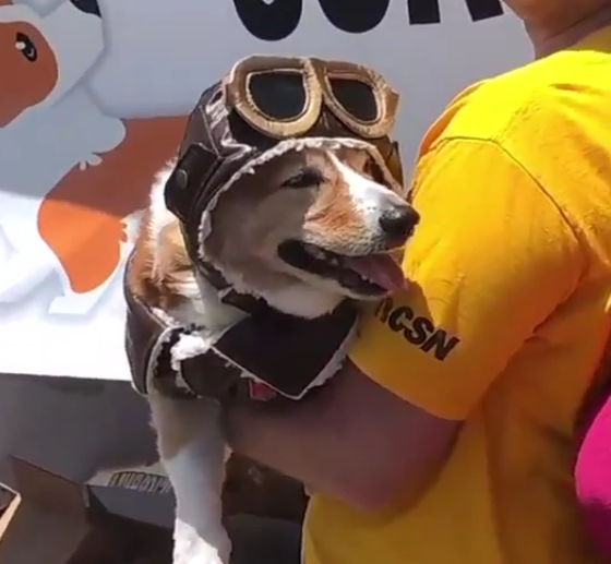 Corgi Con Is Real, And It's Amazing!
