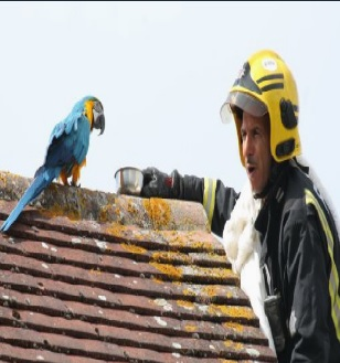 Fire Brigade Comes To Rescue A Parrot But The Parrot Gave Them The Bird And Told Them To Eff Off!
