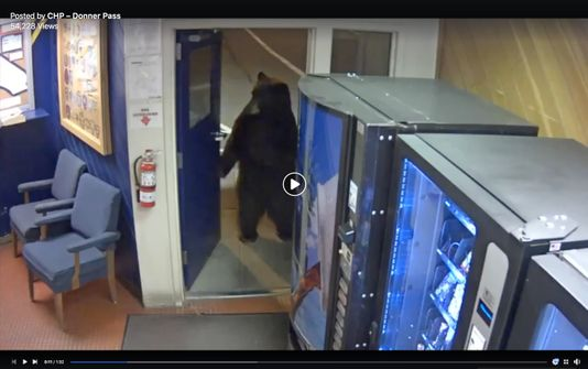 A bear walks into a police station...