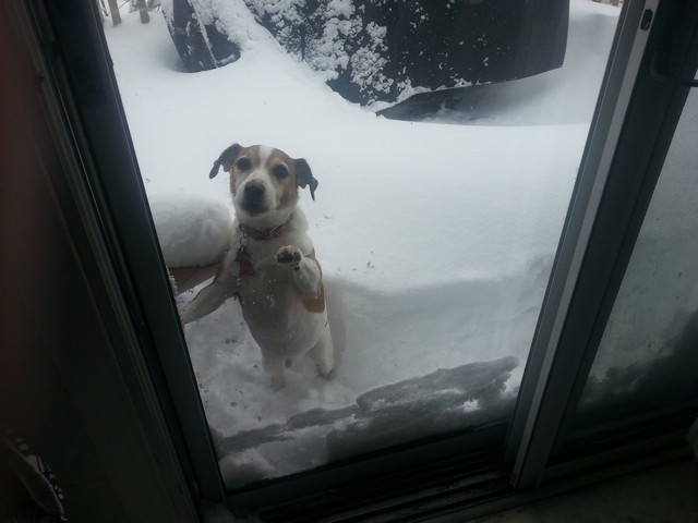 It's cold out! Bring them inside: SPCA