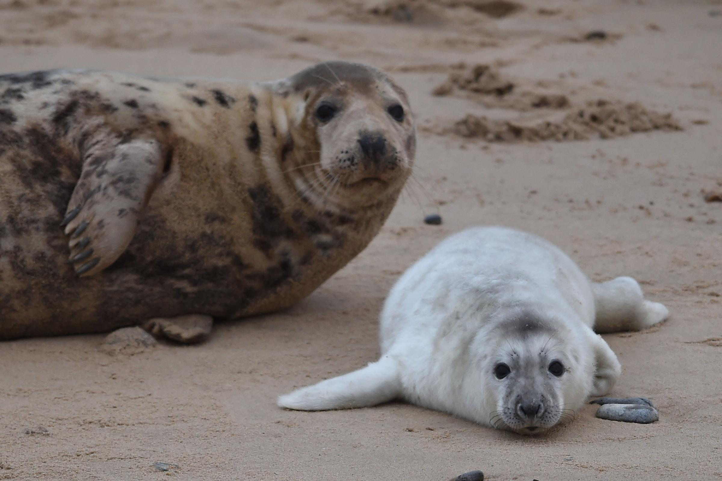 Man Rescued From Colony of Aggressive Seals