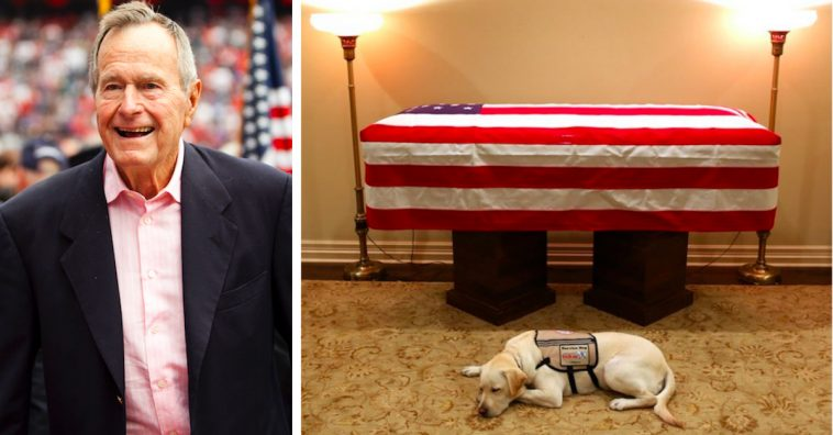 George H.W. Bush's Loyal Service Dog Now Prepping for New Gig Helping Wounded Soldiers
