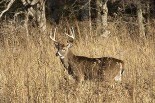 Illinois' First Shotgun Deer Season Opens This Weekend