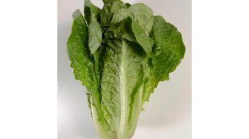 CDC Alert: Romaine Lettuce is Not Safe to Eat