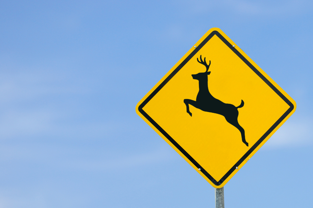 Deer Collisions Up Slightly In Illinois