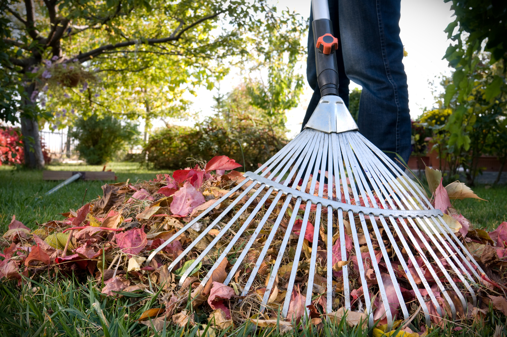 Monday Marks Beginning Of End Of Springfield's Free Leaf Pickup Period
