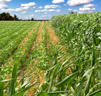 Nebraska crop harvest moves ahead despite wintry weather