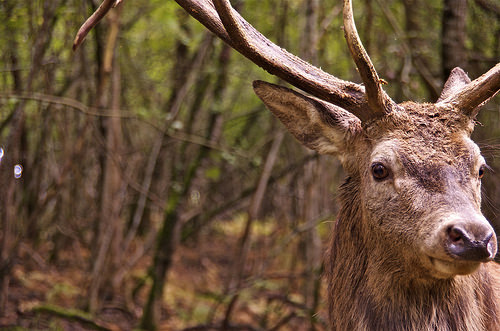 Early checked deer numbers down 10 percent statewide
