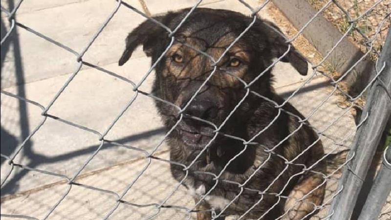 Humboldt SPCA looking for dog fosters throughout July