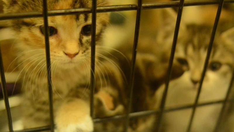 Animals at Albany Humane Society suffer without donations, supplies