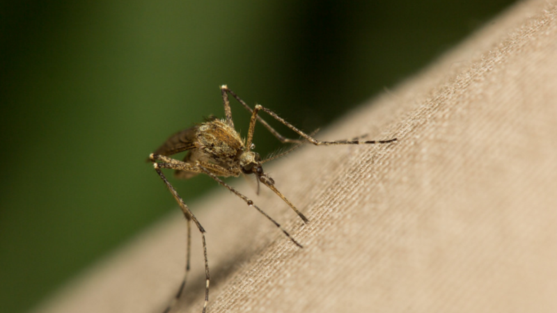 Mosquito-Borne West Nile Virus Soared in 2018, According to CDC Data