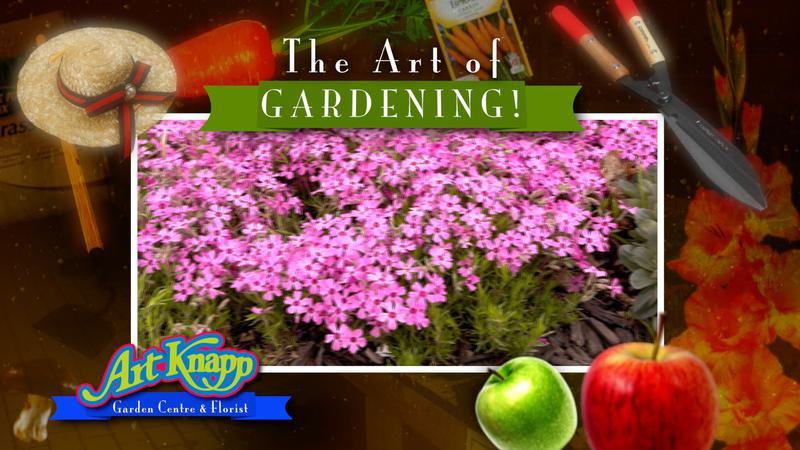 Art Of Gardening Bedding Plant Arrangements Cfjc Today Kamloops