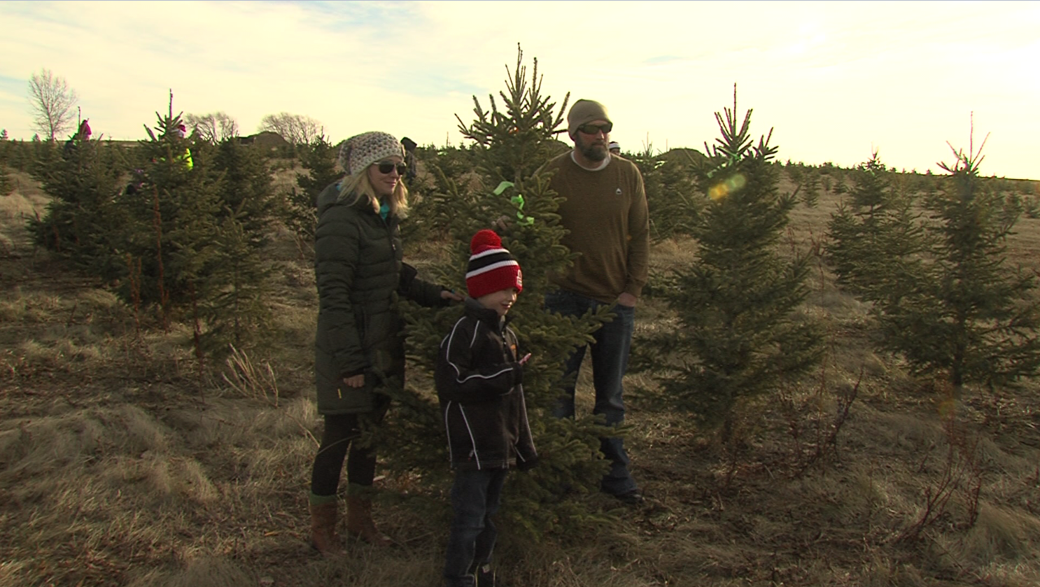 U Cut Christmas Trees.U Cut Christmas Tree Farm Opens To Create New Family