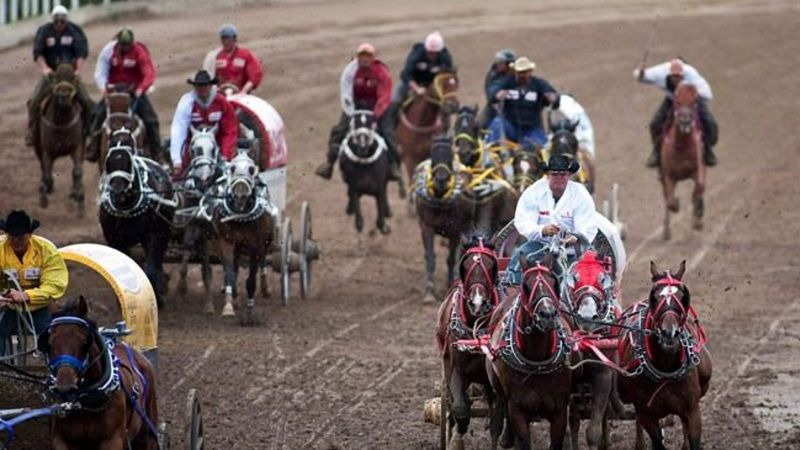 Horse Euthanized After Injury In Calgary Stampede