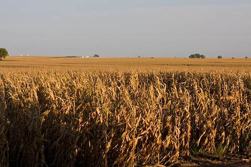 Corn Harvest and Winter Wheat Planting