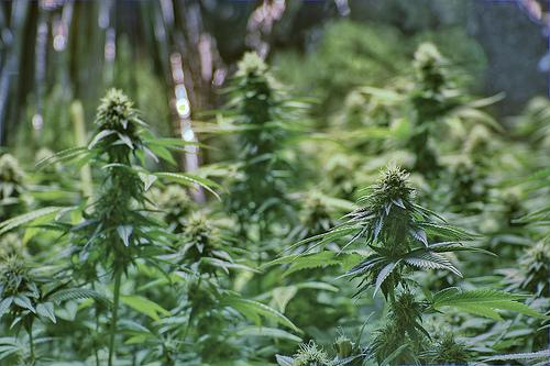 Lawmakers Propose Marijuana Bill