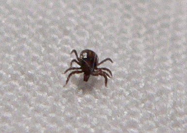 Central Illinois Could See Terrible Tick Season